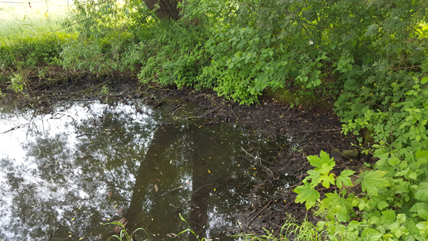 600 - 060 - Die Idylle - Teich beim Leerpumpen