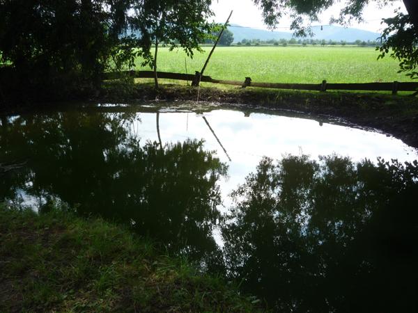 600 - 230 - Teich ist wieder voll
